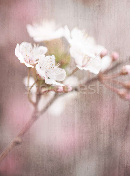 Blooming tree vintage background Stock photo © Anna_Om