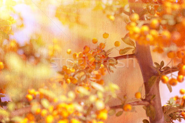 Beautiful rowanberry background Stock photo © Anna_Om