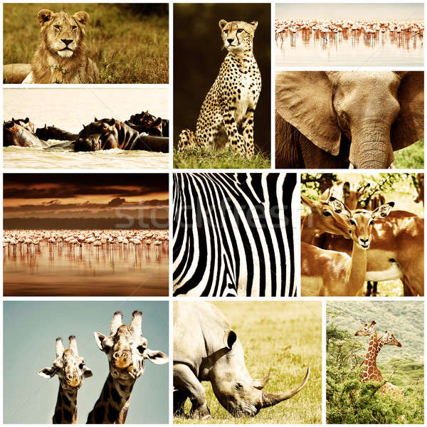 Africaine animaux Safari collage animaux sauvages grand groupe Photo stock © Anna_Om
