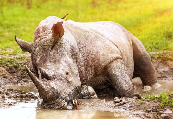 Rinoceronte lama grande Foto stock © Anna_Om
