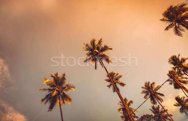 Palmiers coucher du soleil belle exotique arbres Photo stock © Anna_Om
