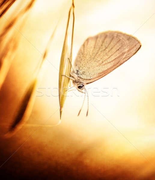Grunge foto borboleta belo sessão Foto stock © Anna_Om