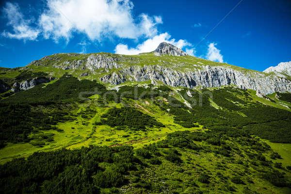 美しい 緑 山 新鮮な 森林 ゴージャス ストックフォト © Anna_Om