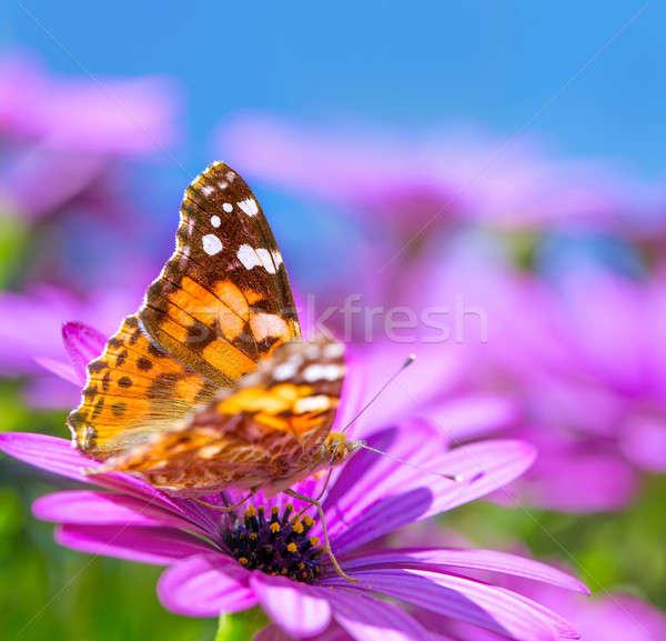 Beautiful butterfly on purple flower Stock photo © Anna_Om