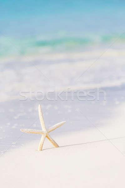Cute sea star on seashore Stock photo © Anna_Om