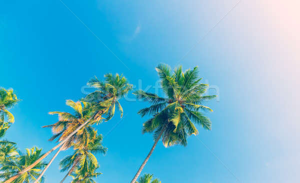 Palm trees over blue sky background Stock photo © Anna_Om