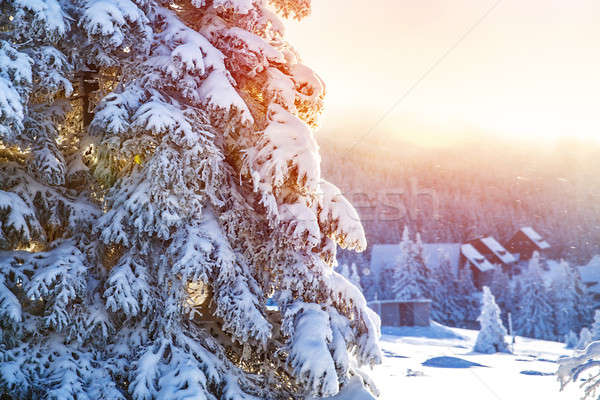 Winter in the mountains Stock photo © Anna_Om