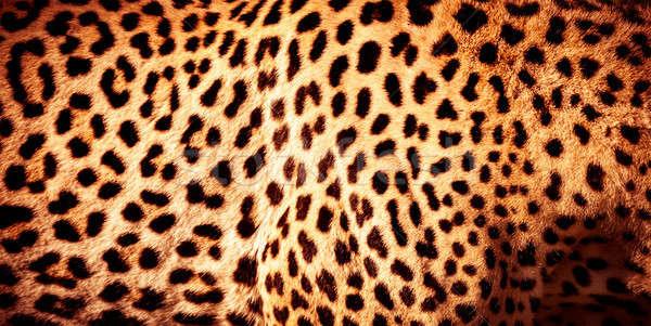 Stockfoto: Mooie · luipaard · huid · natuurlijke · oranje · bont