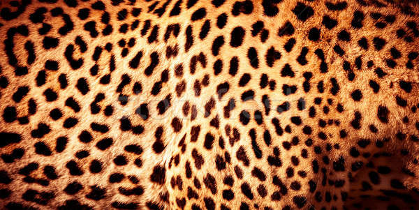 Güzel leopar cilt doğal turuncu kürk Stok fotoğraf © Anna_Om