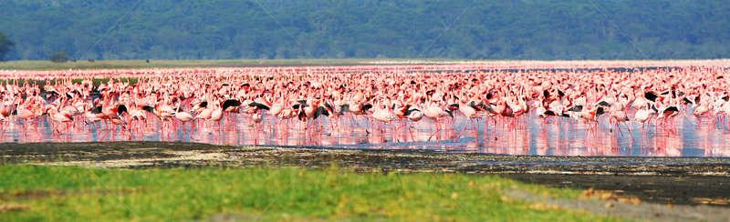 Africano safári lago água natureza verão Foto stock © Anna_Om