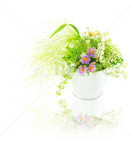 Balde fresco primavera flores silvestres isolado branco Foto stock © Anna_Om