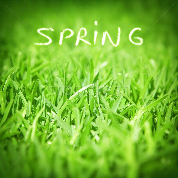 весны зеленая трава свежие природного обои Сток-фото © Anna_Om