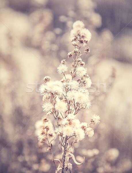 Abstract floral background Stock photo © Anna_Om