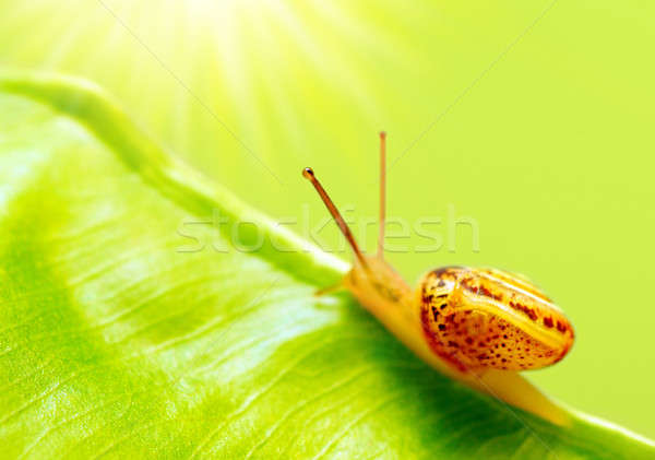 Little snail Stock photo © Anna_Om