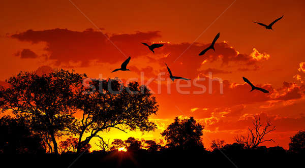 Landscape of Africa with warm sunset Stock photo © Anna_Om