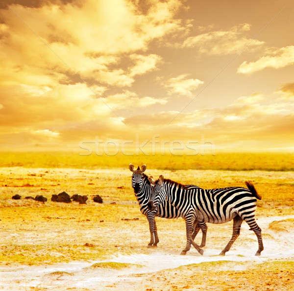 Africaine sauvage zèbres Safari famille paysage Photo stock © Anna_Om