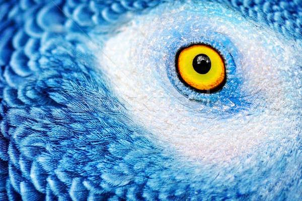 Belle perroquet oeil photo jaune Photo stock © Anna_Om