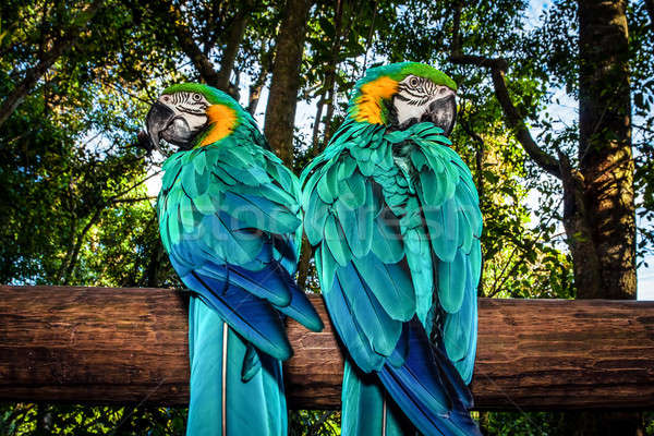 Couple of Macaw parrots Stock photo © Anna_Om