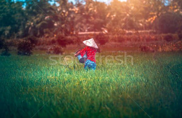 Woman working on rice plantation Stock photo © Anna_Om