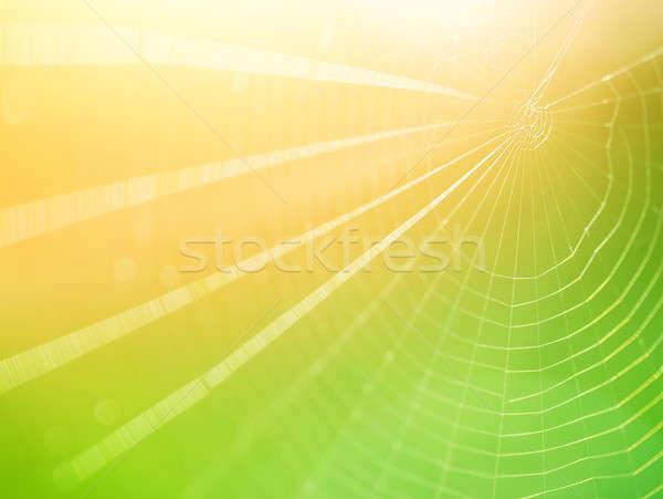 Spinnennetz hellen gelb Sonne Licht Netzwerk Stock foto © Anna_Om