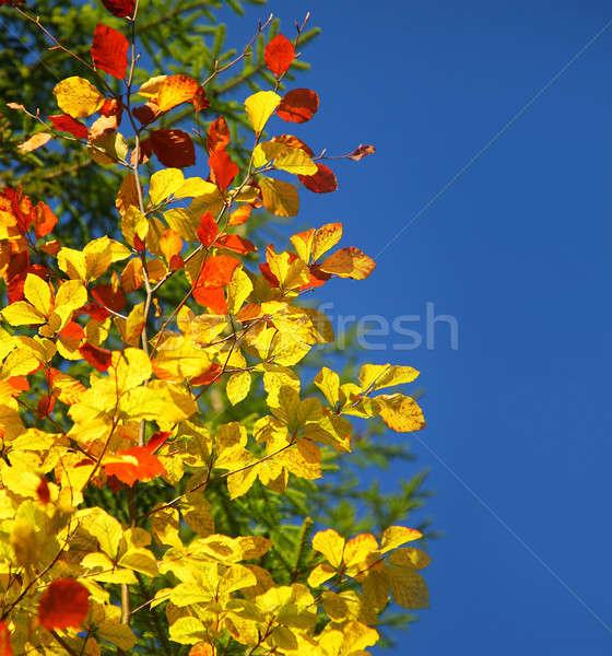 Beautiful autumn border Stock photo © Anna_Om