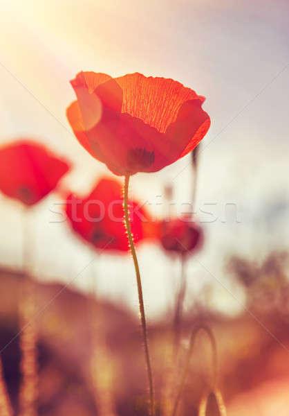 Gentle poppies flowers field Stock photo © Anna_Om