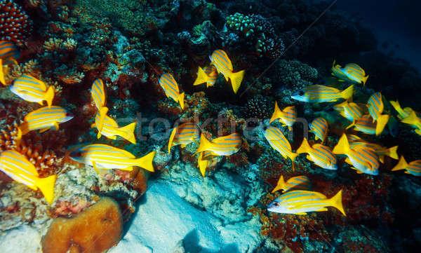 Marine life background Stock photo © Anna_Om