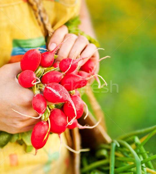 Közelkép érett retek nő kertész növekvő Stock fotó © Anna_Om