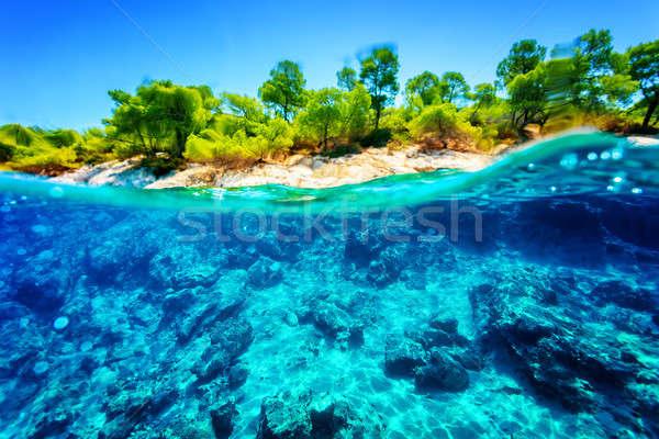 Beautiful underwater nature Stock photo © Anna_Om