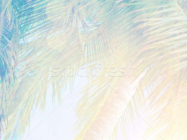 Сток-фото: красивой · тропические · Vintage · пальмовых · листьев · ярко · солнце