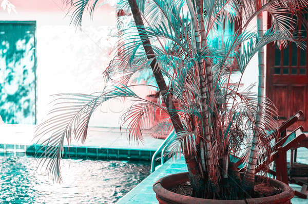 Luxus tengerpart üdülőhely pálmafa medence tökéletes Stock fotó © Anna_Om