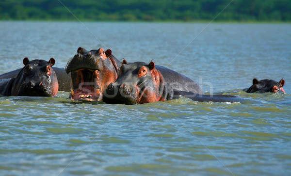 семьи озеро Африка Кения весны природы Сток-фото © Anna_Om