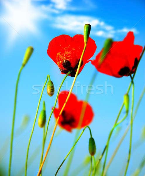 Haşhaş çiçekler çayır kırmızı mavi açık gökyüzü Stok fotoğraf © Anna_Om