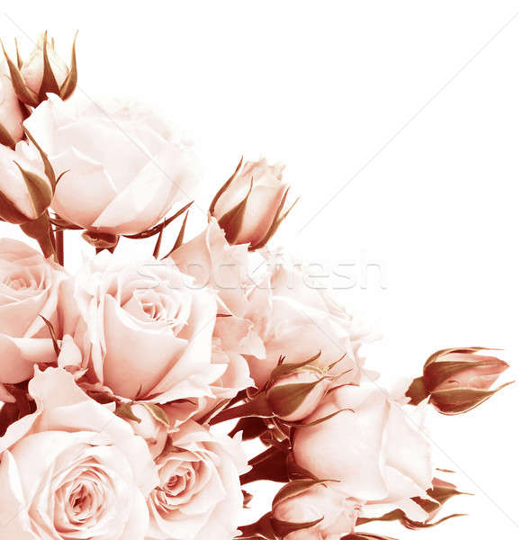 Fresh roses border Stock photo © Anna_Om