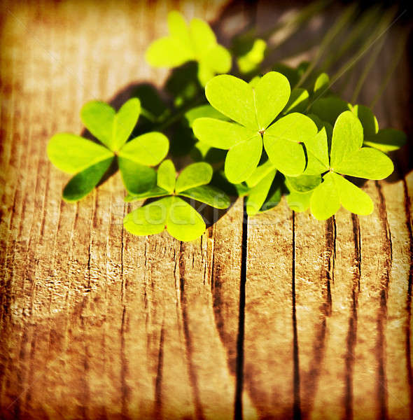 Fresh clover leaves over wooden background  Stock photo © Anna_Om