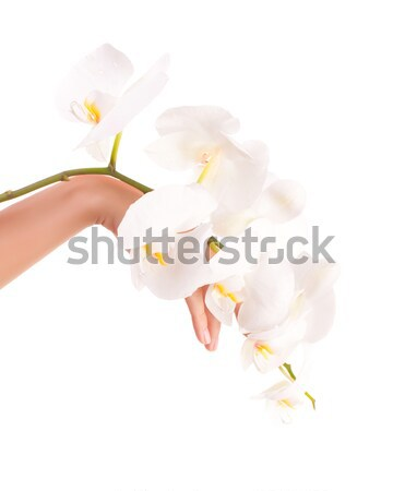 Female hands with orchid flowers Stock photo © Anna_Om