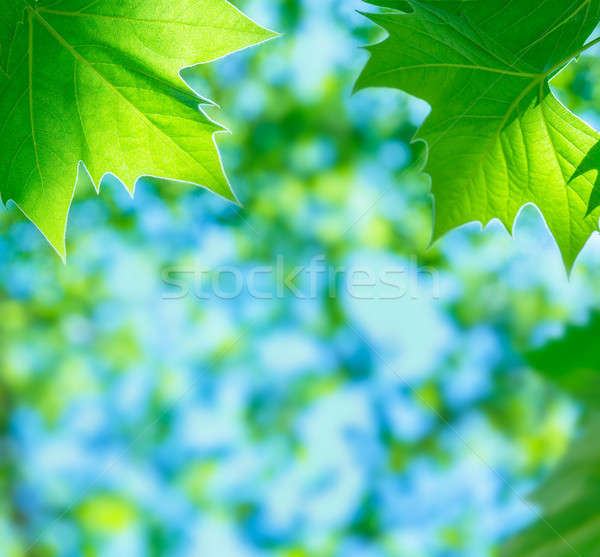 Green leaves background Stock photo © Anna_Om