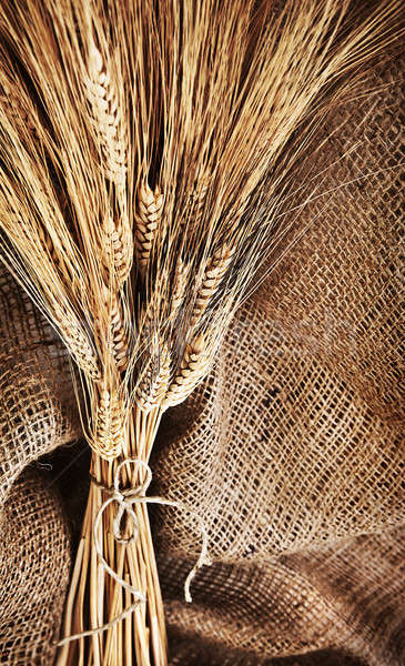 Wheat bouquet Stock photo © Anna_Om