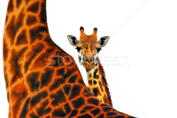 Mother and baby giraffe Stock photo © Anna_Om