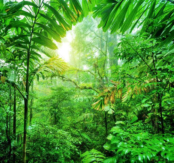 新鮮な 緑 熱帯雨林 夏 時間 公園 ストックフォト © Anna_Om