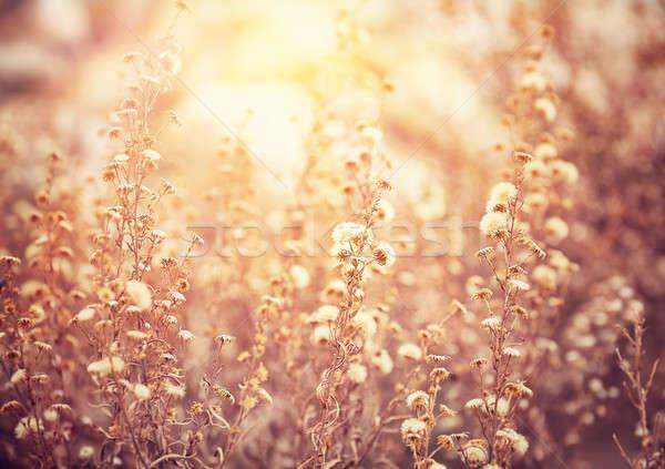 Foto stock: Hermosa · floral · campo · grunge · estilo