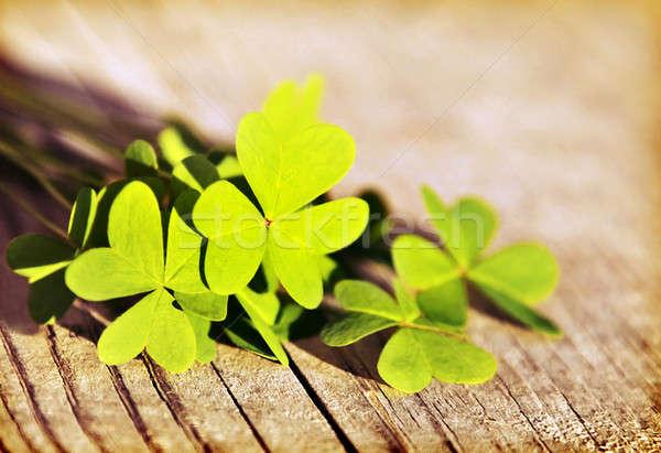 Foto stock: Fresco · trevo · folhas · verde · primavera