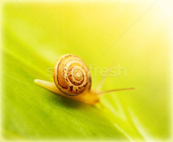 Escargot feuille verte image cute peu fraîches Photo stock © Anna_Om