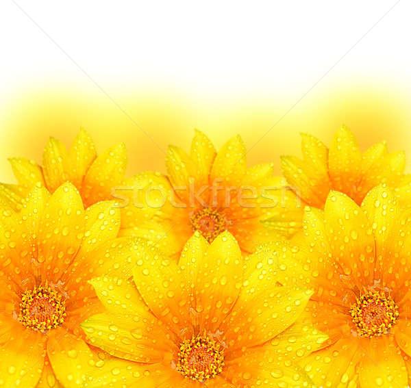 ストックフォト: 抽象的な · 黄色の花 · 黄色の花 · 国境 · 極端な · クローズアップ