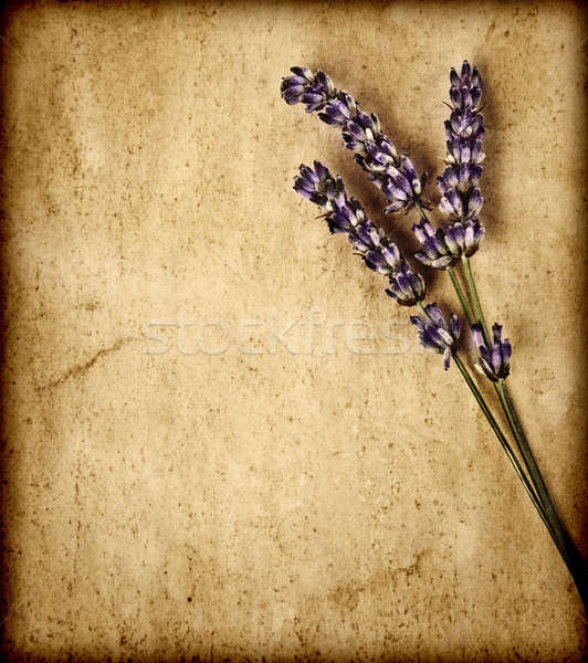Foto stock: Lavanda · flores · isolado · marrom · decorativo