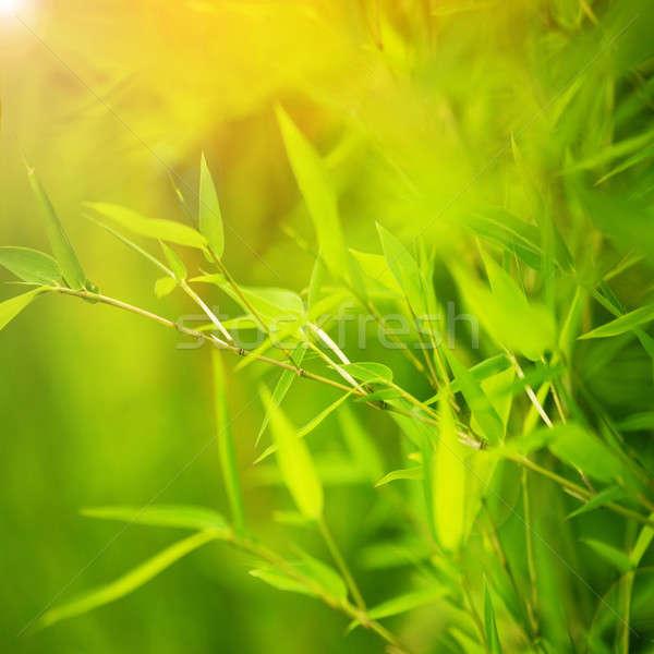 Verde bambu abstrato floral fundo fresco Foto stock © Anna_Om