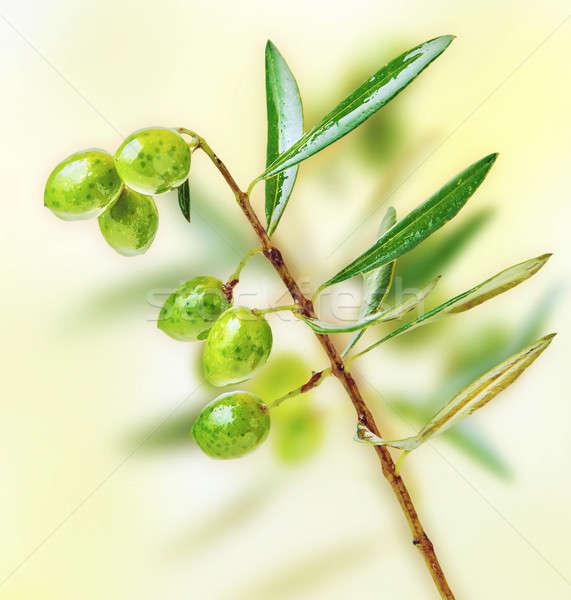 Friss zöld olajfa ág kert gyümölcsök Stock fotó © Anna_Om