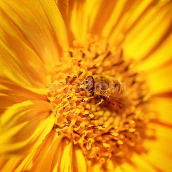 Mooie weinig bee bloem heldere Geel Stockfoto © Anna_Om