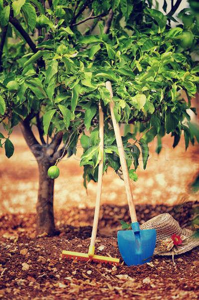 Gardening tools Stock photo © Anna_Om
