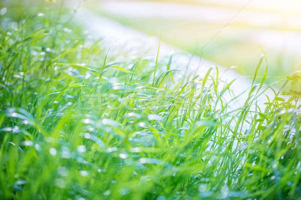 Fresh green grass background Stock photo © Anna_Om